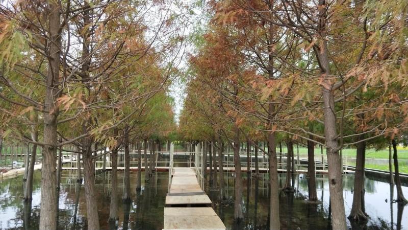 尤其這幾年注入了水又多了木棧道,唯美倒影超好拍。(記者許國楨翻攝)