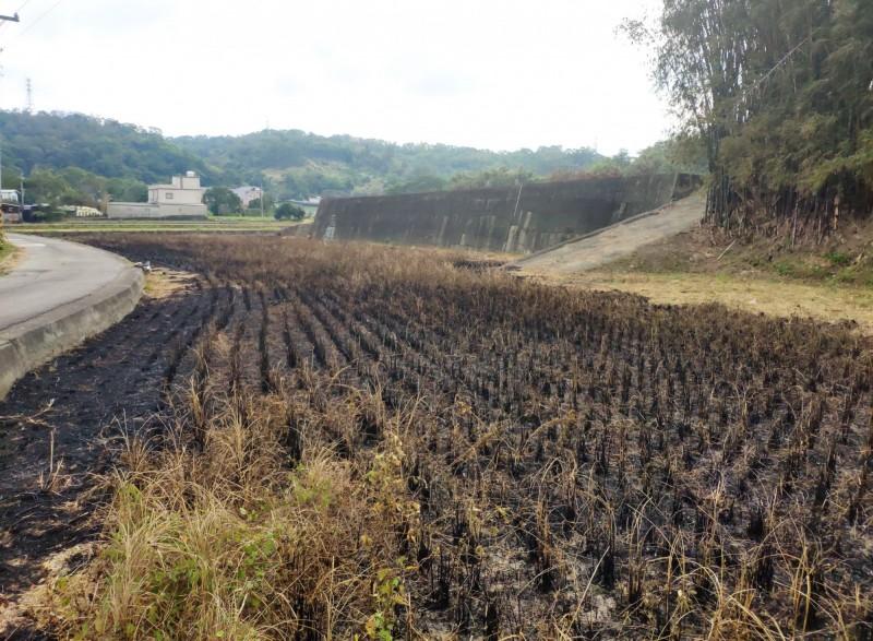 環保局表示,燃燒農田面積約600平方公尺,將再查明土地所有人,函文要求土地所有人善盡管理責任,不得再有露天燃燒行為,如經查獲污染情形者,將依規定辦理。(記者彭健禮翻攝)
