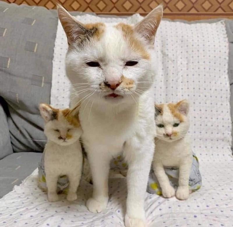 網近來瘋傳有外觀長相一模一樣的貓媽媽跟2隻貓寶寶,然而卻有眼尖的網友發現異狀,指出事有蹊蹺!(圖擷取自臉書_爆廢公社)