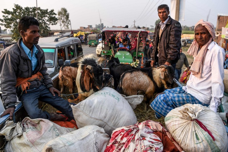 依照傳統習俗,帶上山羊參與加迪邁節的信徒。(法新社)