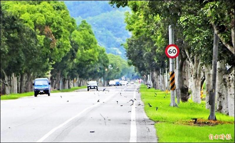 交通部公路總局設計台九線花東縱谷景觀大道計畫,預計113年完成拓寬。 (資料照,記者花孟璟攝)