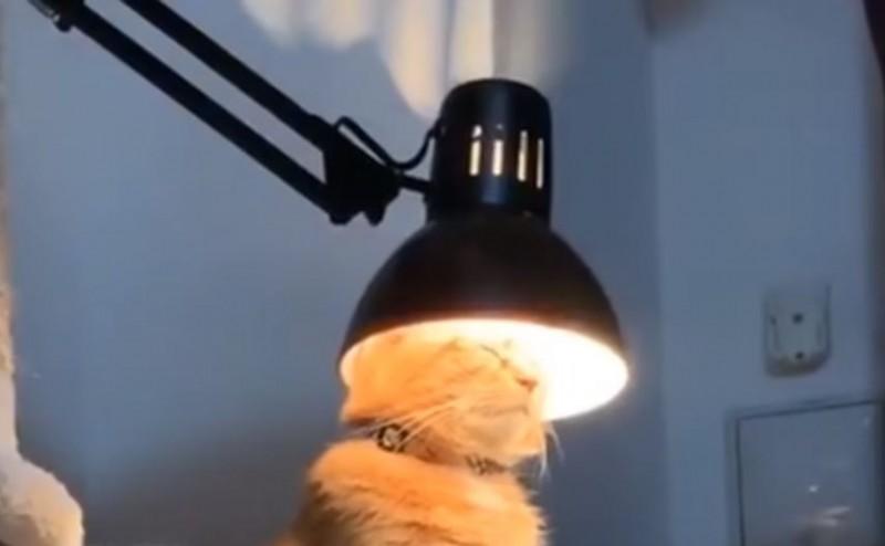 小橘貓在檯燈之下閉眼端坐。(圖擷取自臉書_Children of The Night)