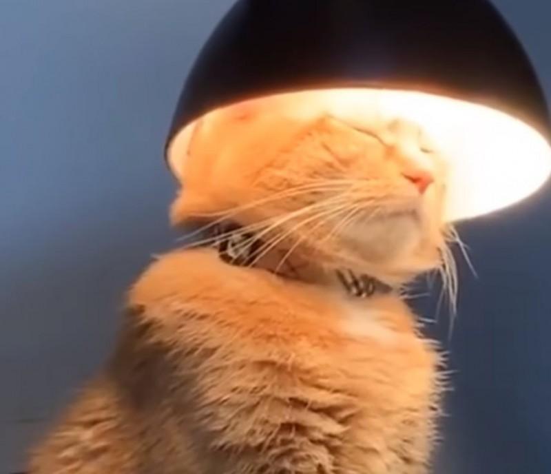 小橘貓在檯燈之下閉眼端坐,表情看起來相當沉靜莊嚴,極度像在冥想沉思。(圖擷取自臉書_Children of The Night)