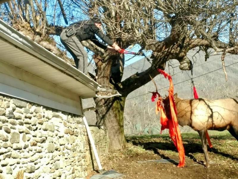 貪吃麋鹿闖入人類後院,意外遭樹上吊床纏上,警方將吊床剪斷釋放麋鹿。(圖擷自海伍德郡警長辦公室官方臉書)