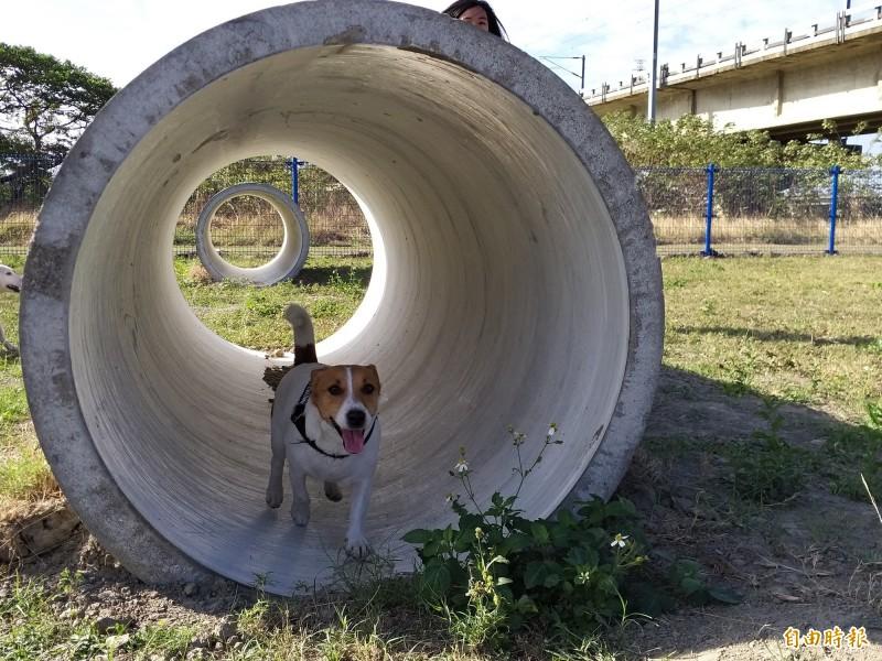 在千呼萬喚下,新竹縣竹北市首座狗狗公園啟用!地點就位在頭前溪鐵道橋下。(記者廖雪茹攝)