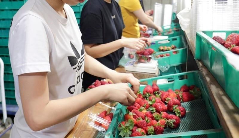 澳洲打工度假驚爆台灣女性被迫當性奴換取住宿和生活費用。示意圖。(美聯社檔案照)