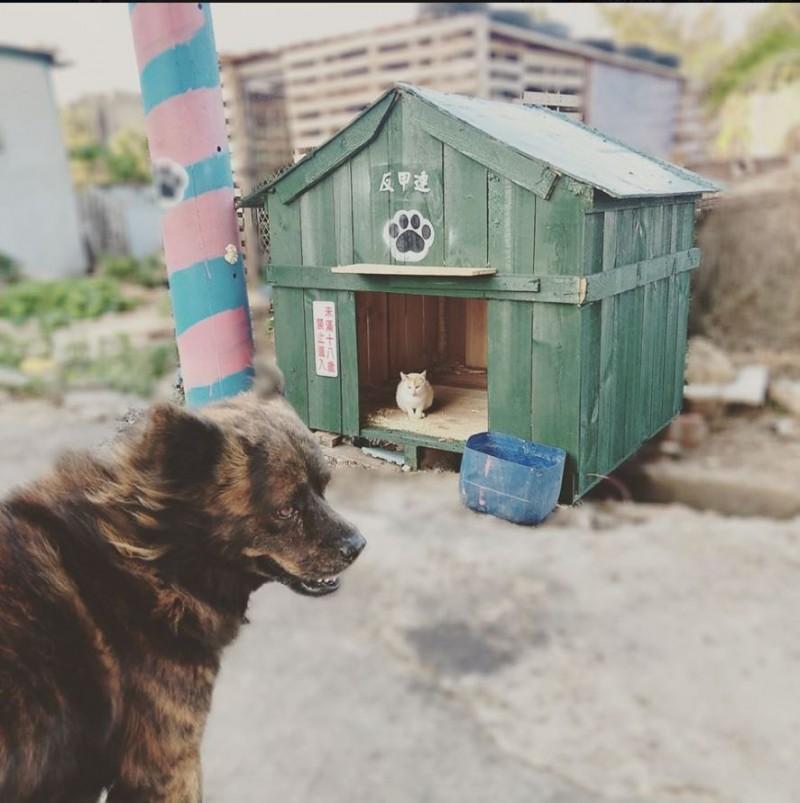 原PO貼出幫阿肥蓋了狗屋卻被喵星人霸佔。(圖擷自爆廢公社)