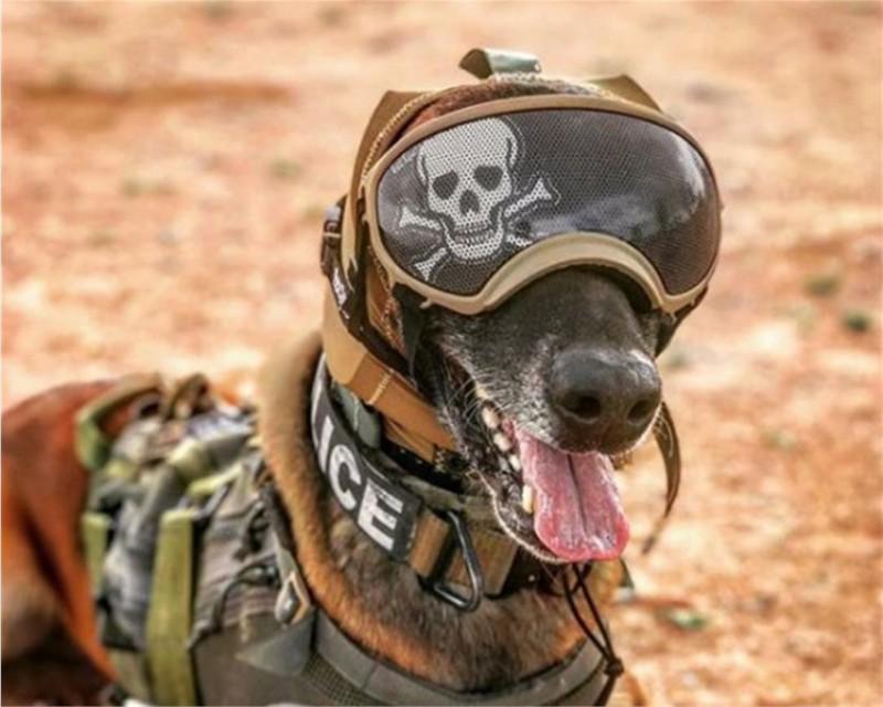 美國陸軍日前公布一項新型「犬隻聽覺保護系統」(CAPS),有效降低戰場噪音,保護狗的敏銳聽覺。(照片取自美國陸軍網站)