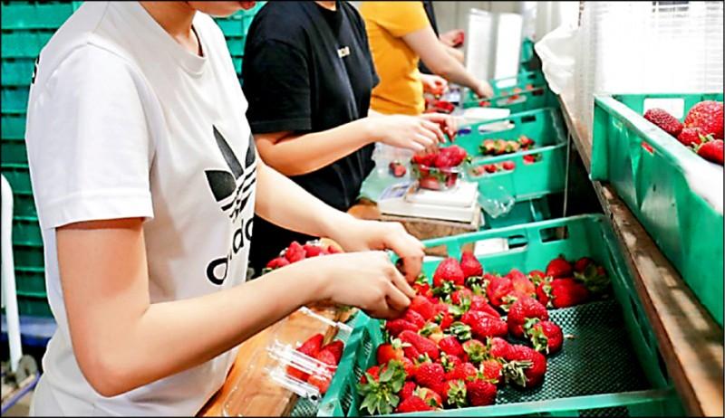 8名台灣女到澳洲一座農場打工,驚爆農場主人強迫她們提供「性服務」,換取住宿費用和生活費。此為示意圖,非新聞中人物。(美聯社檔案照)
