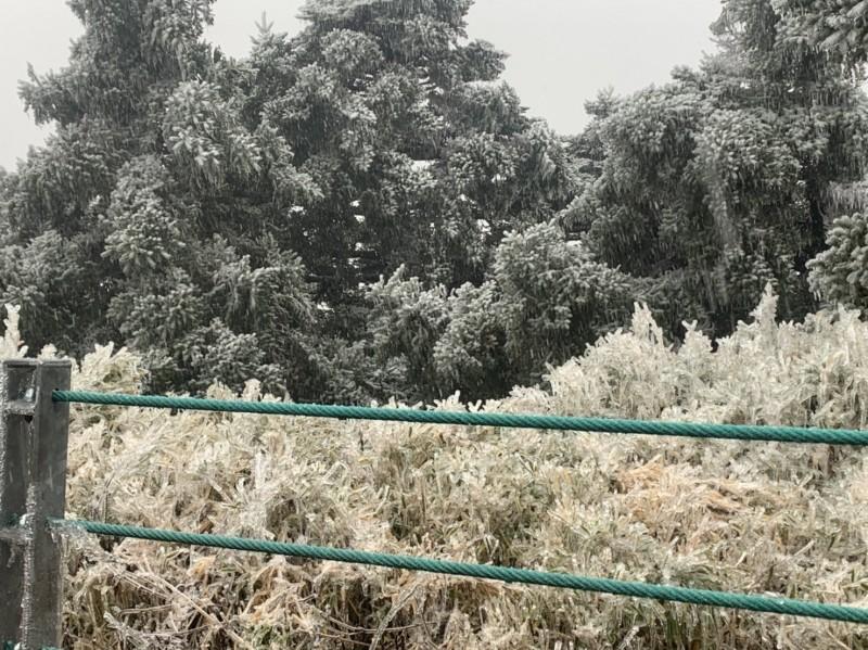 合歡山下午2、3點由降冰霰轉成降雪,路旁邊坡草木也披上一層白雪。(圖由民眾范洪明提供)