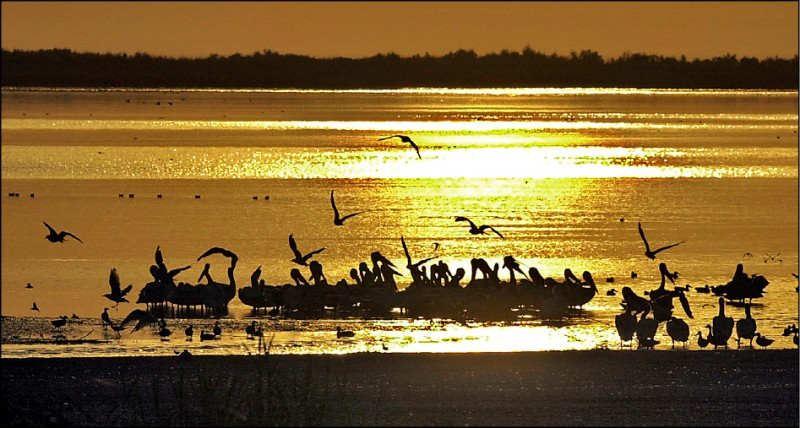科學家根據近四十年飛經美國芝加哥市不幸喪命的北美候鳥,找到氣候暖化的證據。圖中的美國加州索爾頓湖為北美候鳥重要棲地。(美聯社檔案照)