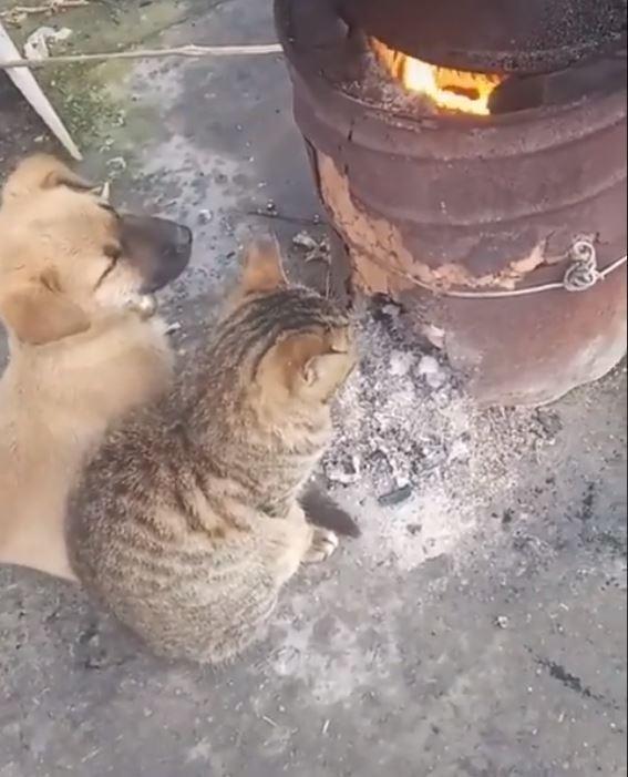 原PO貼出正在火爐前取暖的幼貓幼犬。(圖擷自爆廢公社)