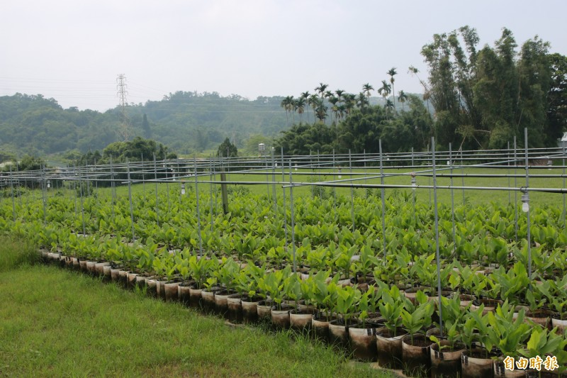 農委會修正政策性農業專案貸款辦法,鼓勵有意從農民眾投入農業工作。(本報資料照)