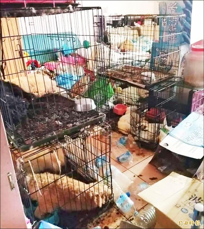 從套房大門往內看狗屍一片、有的犬隻被撕咬僅剩狗頭(資料照)