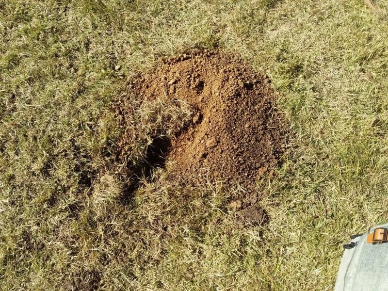 池上正興分校操場被穿山甲挖出一個洞。(記者黃明堂翻攝)