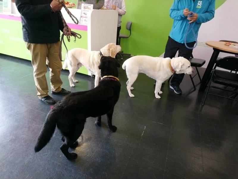 選戰進入最後階段,蔡英文總統要求3隻愛犬應該多做一點事情。(圖由支持者提供)