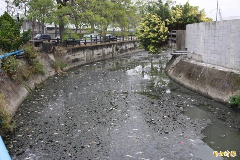 頭份工業區旁溝渠今早被發現大量魚群暴斃,水面多污漬及死魚,環保局判斷為溶氧量過低所致。(記者鄭名翔攝)