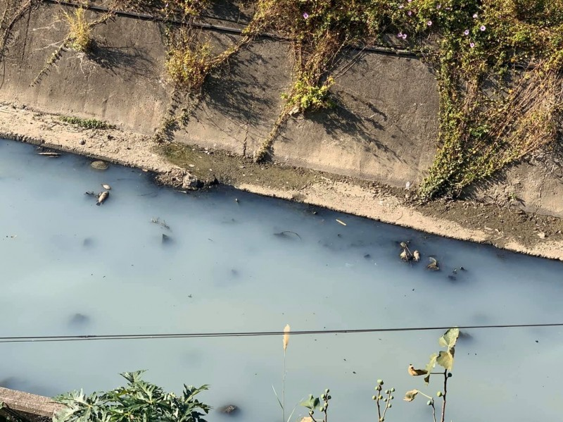 竹南射流溝水遭染呈乳白色,許多魚屍漂浮水面上,環保局已鎖定特定不肖業者。(記者鄭名翔翻攝)