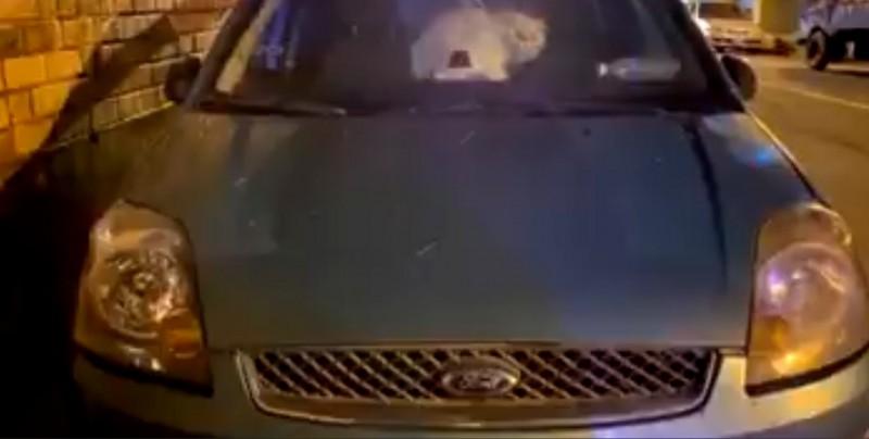 直擊4隻貓被關車內養,民眾質疑虐貓慣犯「貓爺爺」所為。(記者李容萍翻攝)