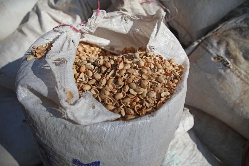 由於燃油緊缺價格高漲,面臨寒冬的敘利亞人被迫尋找燃料替代品,其中之一就是「開心果殼」。(法新社)