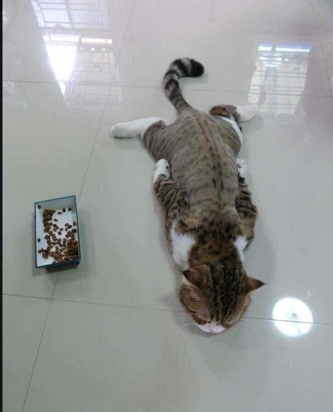 原PO貼出自家主子任性不吃飼料的照片。(圖擷自爆廢公社公開版)
