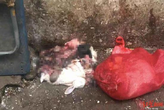 西區六街盡頭遺棄的動物屍體和內臟。(圖擷取自《紅星新聞》)