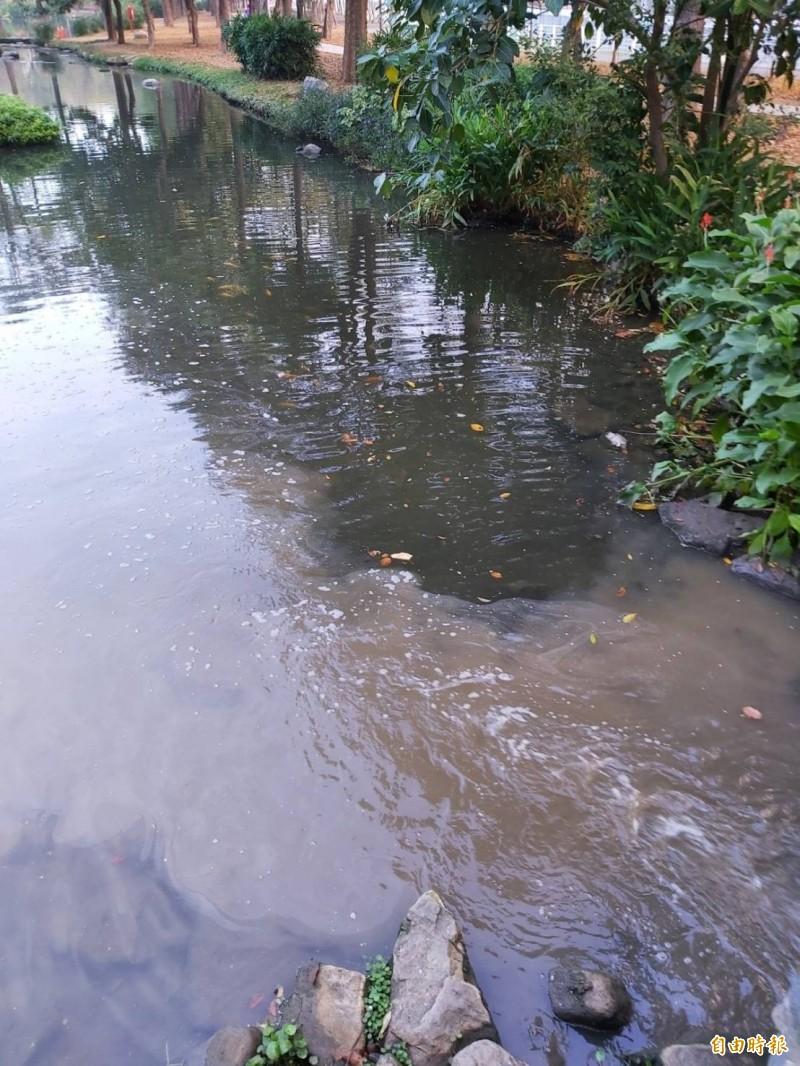 「忘憂森林」大東濕地公園生態池又黑又臭泛油污。(記者陳文嬋攝)