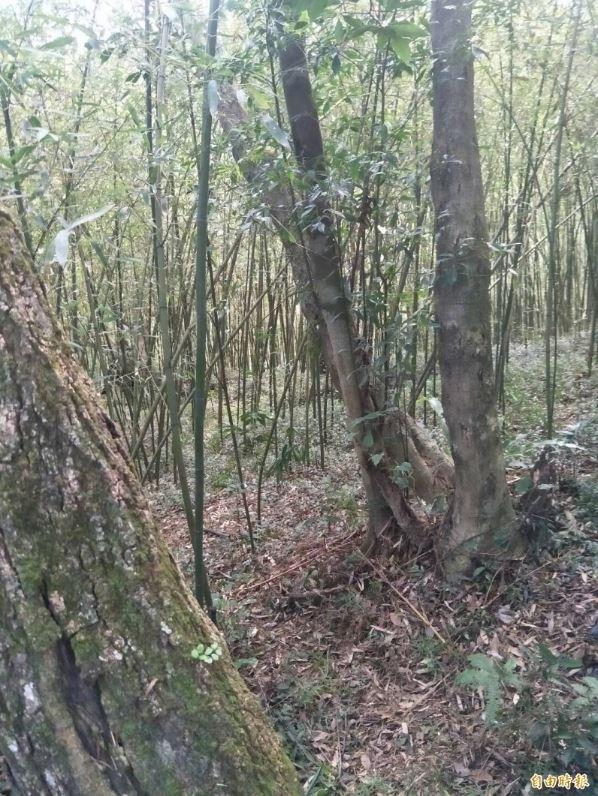明道胞兄一家三口被人發現陳屍在北市內湖區安泰街土地公廟旁登山步道。(資料照)