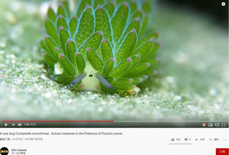 有人覺得「藻類海蛞蝓」像羊。(圖擷取自YouTube)