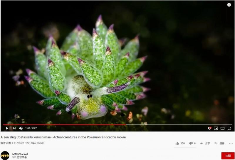 也有人覺得「藻類海蛞蝓」像牛。(圖擷取自YouTube)