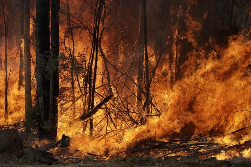 新南威爾斯州是這場澳洲野火的重災區之一。(美聯社)