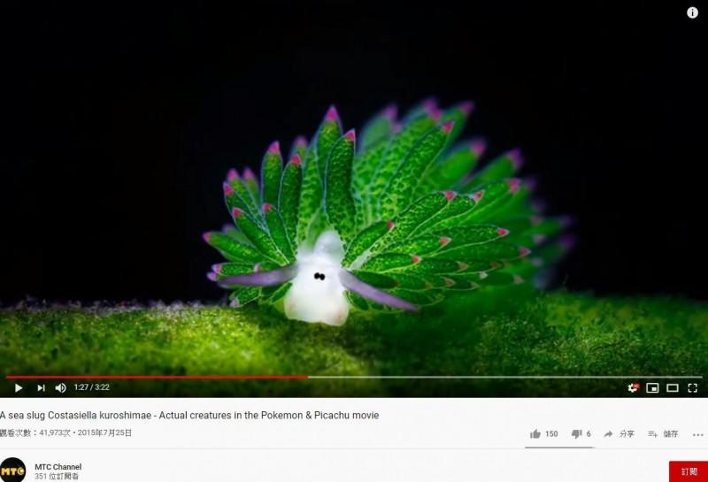 俗稱「葉羊」的「藻類海蛞蝓」有著可愛的外表,融化眾多網友的心。(圖擷取自YouTube)
