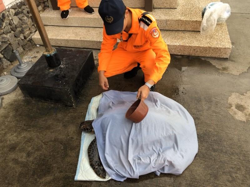 岸巡人員幫助受傷綠蠵龜保濕。(記者王宣晴翻攝)