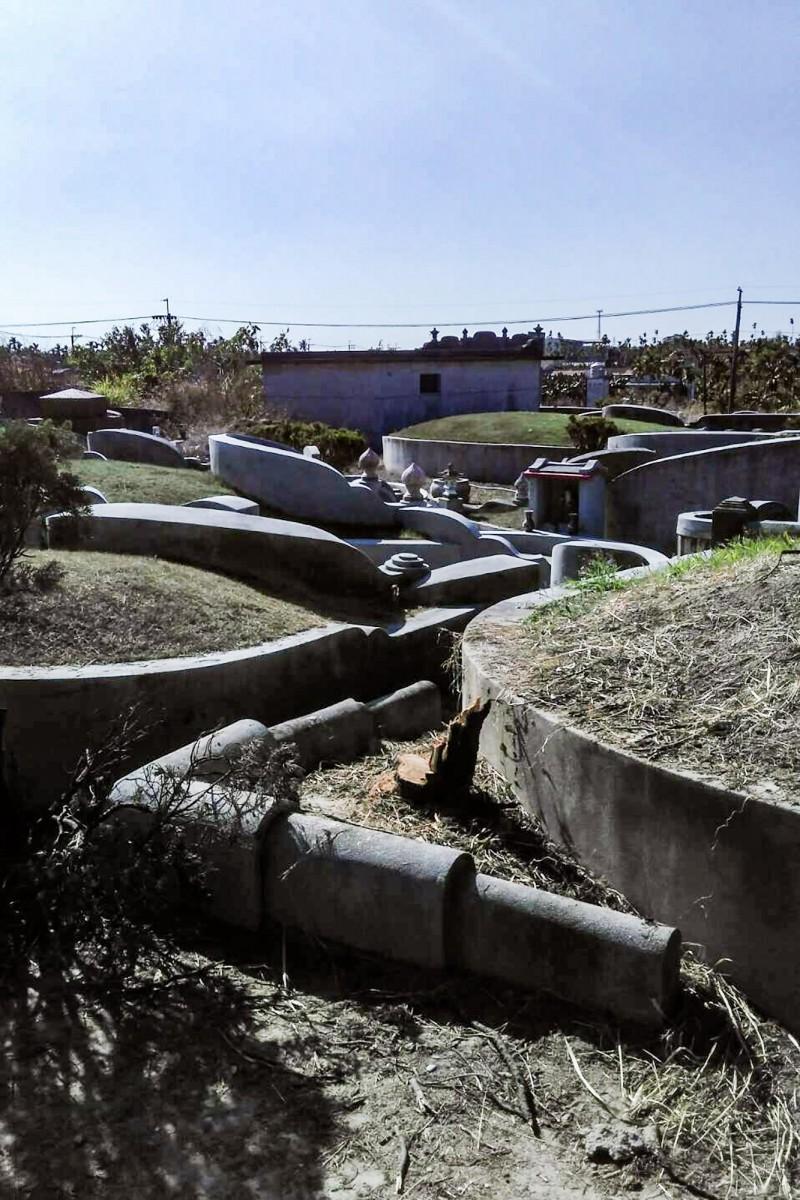 蘇揆祖墳周邊有3棵龍柏遭砍。 (記者邱芷柔翻攝)