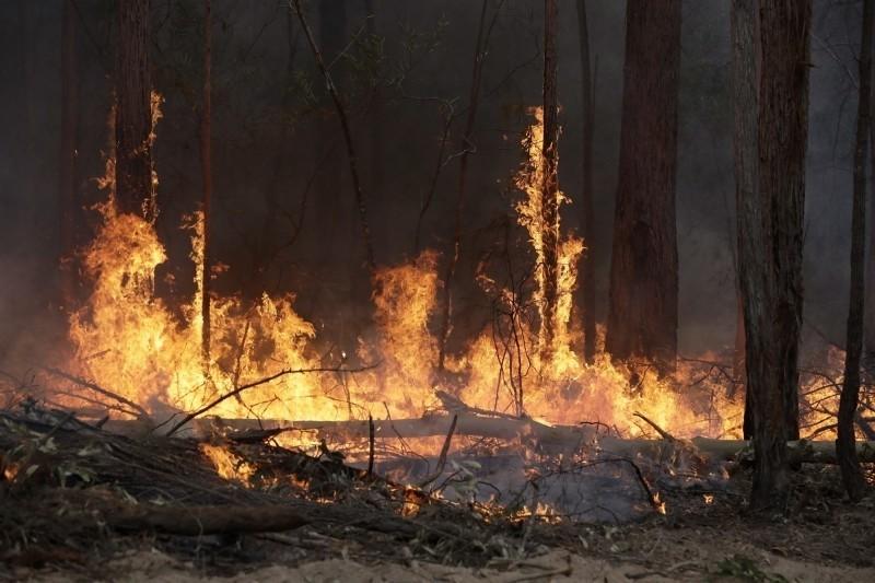 澳洲野火釀災,外交部今天表示,初步規劃捐贈10萬副醫療等級口罩,供應當地受濃煙影響的居民。(美聯社資料照)