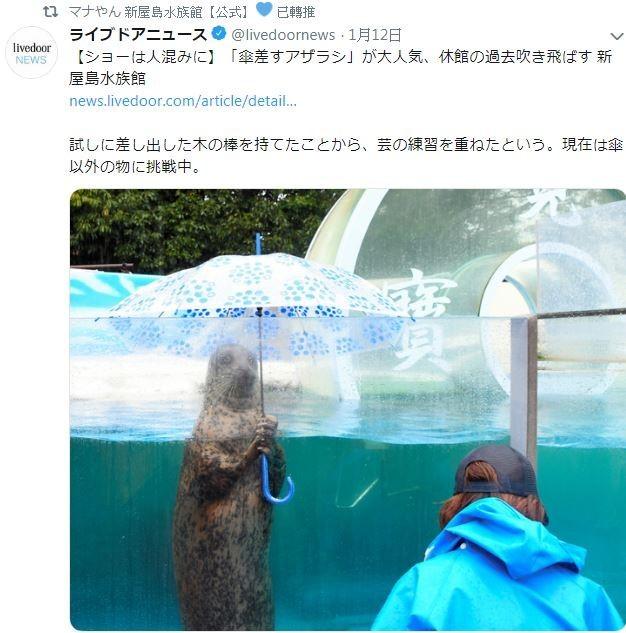 水族館訓練海豹撐傘救人氣,但也惹議。(圖擷取自推特)