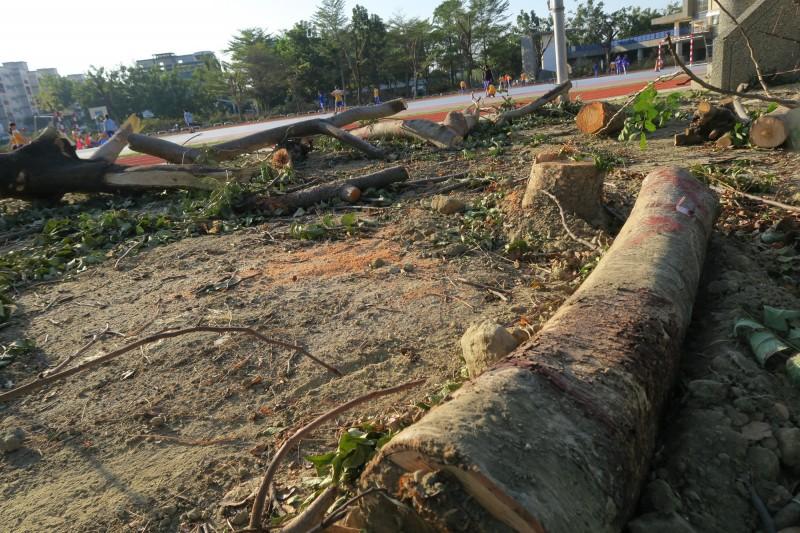校園清除約80棵樹齡約20年樹木。(記者黃旭磊翻攝)