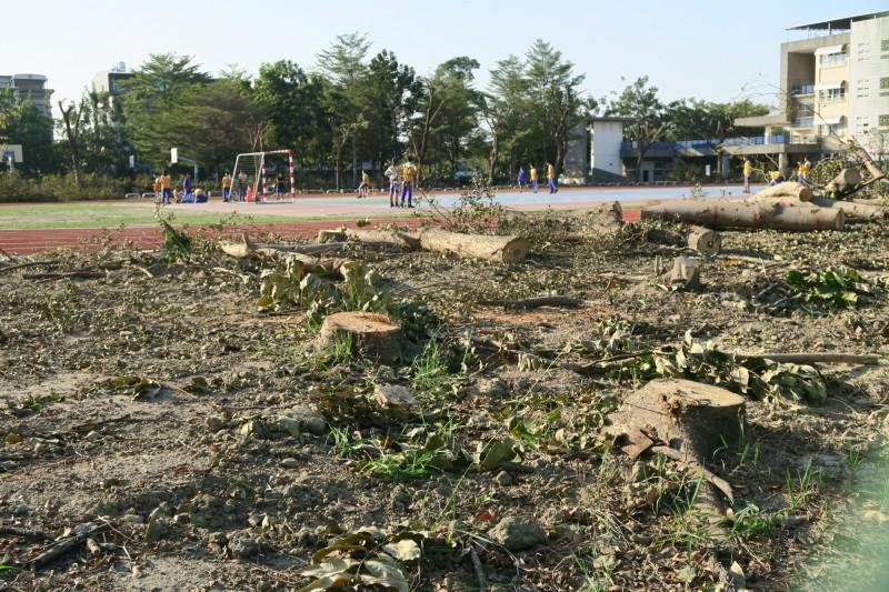 80棵校樹被移平。(記者黃旭磊翻攝)