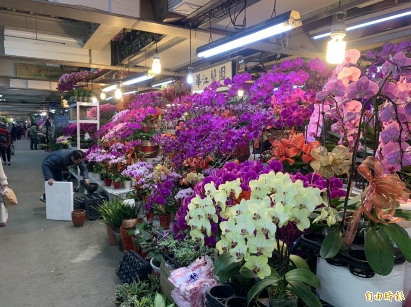 板橋花市各式各樣的花卉,選擇多,交通又便利。(記者何玉華攝)