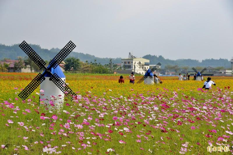 花海中設置了浪漫的風車。(記者許麗娟攝)