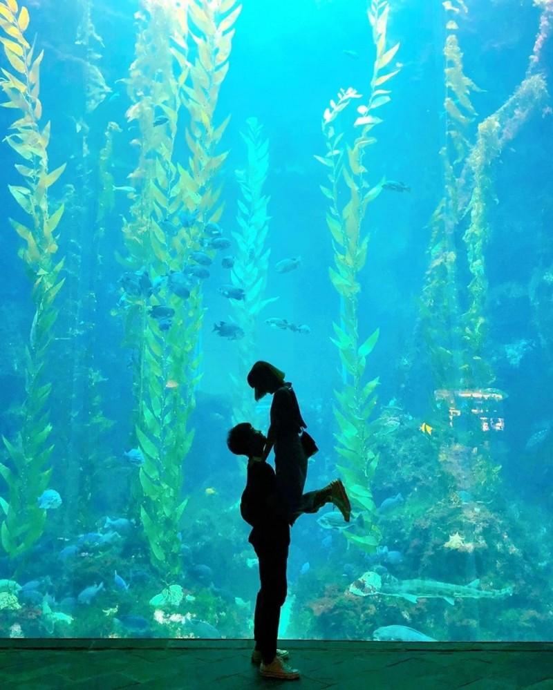 屏東海生館巨大遼闊、色澤夢幻的「海藻森林」成了拍剪影最潮打卡景點,吸引情侶甜蜜合照曬恩愛。(記者蔡宗憲翻攝)