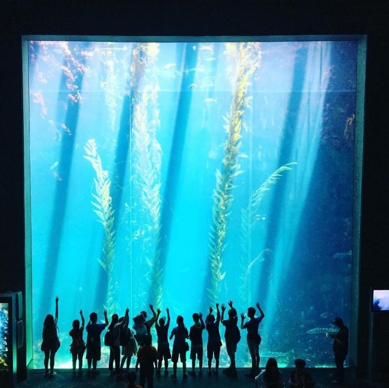 一群遊客到壯闊的海生館「海藻森林」拍剪影,留下歡樂回憶。(記者蔡宗憲翻攝)
