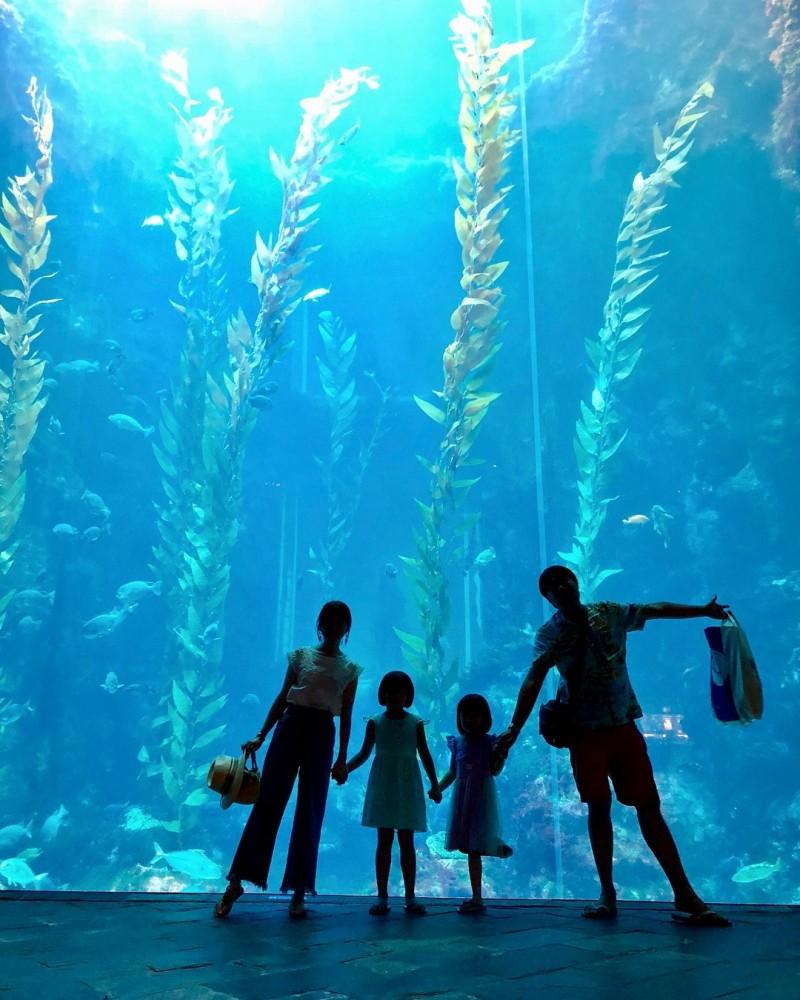 親子一起來海生館「海藻森林」拍剪影。(記者蔡宗憲翻攝)