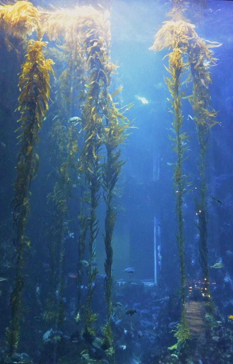 「海藻森林」彷彿直入天際的高聳巨藻。(記者蔡宗憲翻攝)