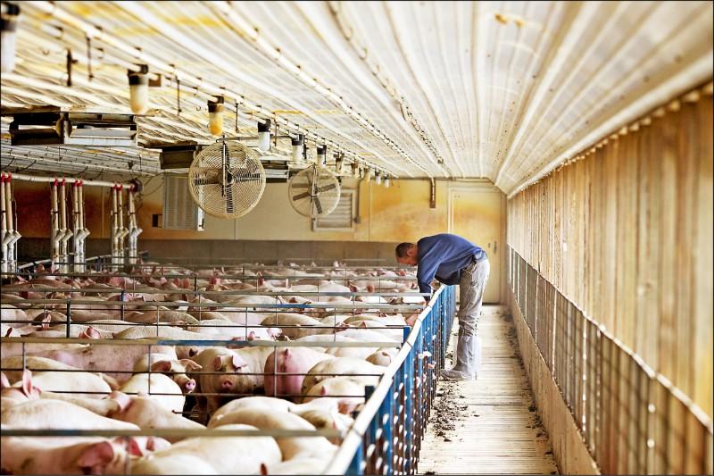美國與日本都要求儘速開放美豬、美牛與日本福島五縣市食品進口,成為蔡政府選後的難題。 (彭博檔案照)