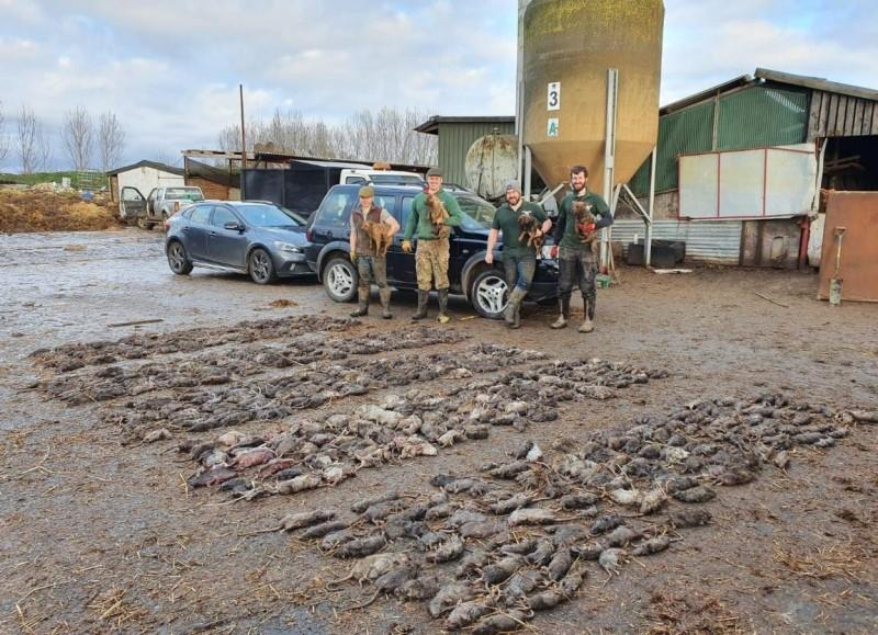 英國捕鼠組織「Suffolk and Norfolk rat pack」以天生擅於捕鼠的小型工作犬「諾福克㹴犬」,在英國東南部地區提供免費捕鼠服務,12日時,他們在薩福克郡埃伊(Eye, Suffolk)的一間養豬場,進行了成立以來最大規模的捕鼠行動。(圖擷取自臉書 Suffolk and Norfolk rat pack)