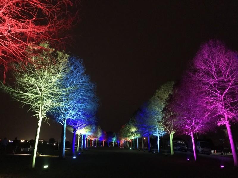 三星鄉安農溪落羽松秘境今晚點燈迎新年。(記者江志雄翻攝)
