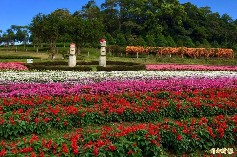 大溪花海農場炮杖花、一串紅、太陽鳳仙花、薰衣草、鼠尾草及山櫻花陸續盛開。(記者李容萍攝)