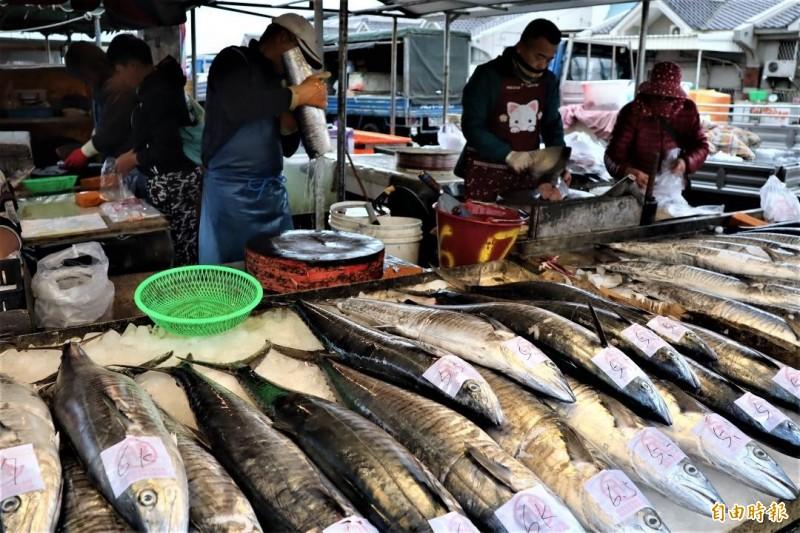 農曆年後澎湖白金土魠,因內需市場價格崩盤。(記者劉禹慶攝)