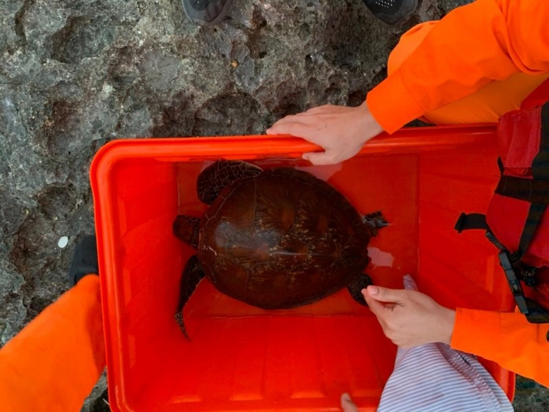 墾丁國家公園海域又傳海龜遭漁具刺傷。(記者陳彥廷翻攝)